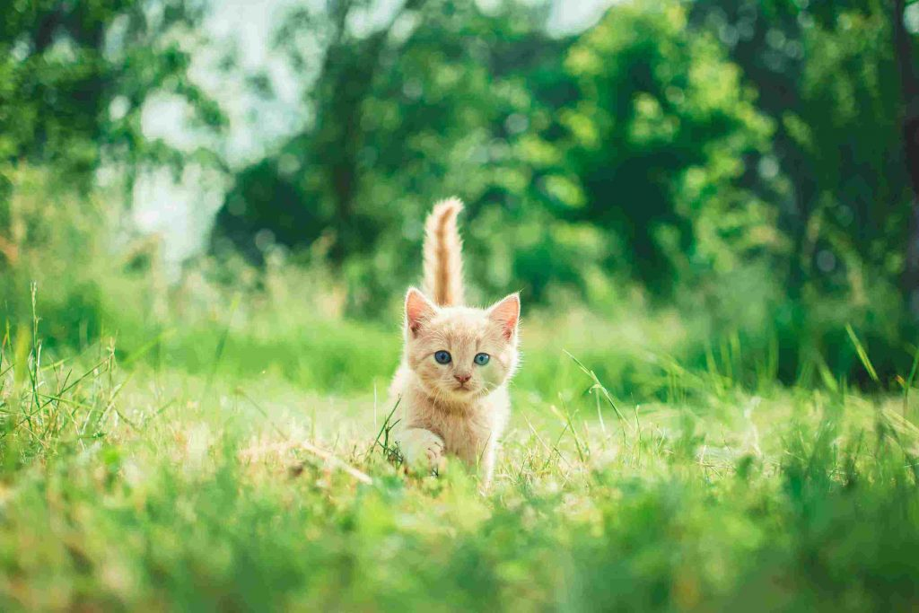 happy kitten to distract from challenges of non toxic nursery